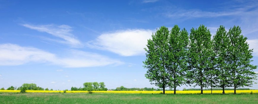 pring landscape - Trees on green field the blue sky-2